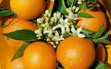 Wallcate.com - Appetizing Fruits