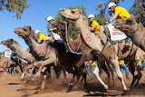 Outback camel racing
