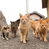 Kittygang