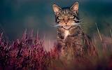 Cat collektion1w (92)