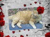 Valentine's Day #2