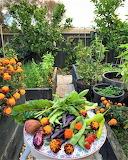 pretty produce