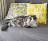 So Much Prettier Than These Pillows