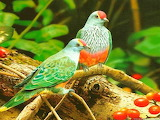 Beautiful-colorful-birds