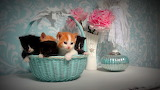 ^ You never know when a basket of kittens might show up