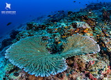 Andaman-Islands-Dive-Travel-Guide-Reef