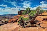 Australian waste land