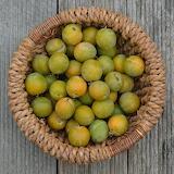 healthy food-plums