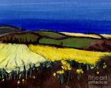 Cornish Daffodils by Sara Pendlebury