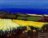 Cornish Daffodils by Sara Pendlebury