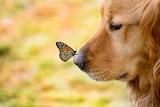 Animals in love-tumblr-3