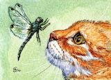 Cat-and-dragonfly Svetlana Ledneva Schukina