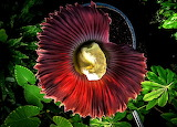 #The Corpse Flower