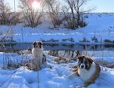 Creek Companions