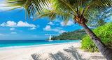 Tropics Coast Sand Palms Beach 553294 1280x697