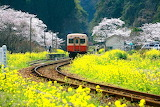 train, wildflowers