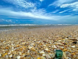 Beach with many shells