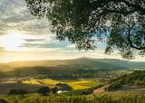 D2 Sonoma USA by Karen Wibbs-Getty credit CNT