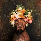 #Flower Power Puppy