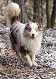 Healthy Happy Snow Dog