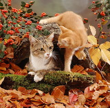Cat-with-ginger-kitten-among-autumn-leaves