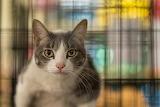 Cat in PetSmart