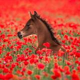 ❤️Little Poppy Field Foal...