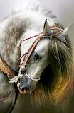 Majestic White Horse