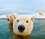 ☺♥ Polar bears...