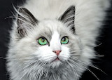 Green Eyes, of Course!