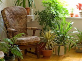 IStock-3224261 chair-surrounded-by-houseplants s4x3.jpg.rend.hgt