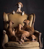 Dog pile