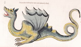 Dragon Aldrovandi 2