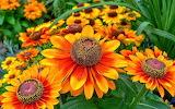 Flores color naranja