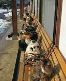 Cats getting warm sun on bench