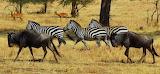 Serengeti ~ Tanzania