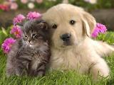 Puppy Love @ wallpapercave.com...
