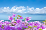 Flowers, sea, sky, pink, sunshine, seascape, tropical