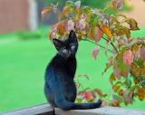 Black kitten looking back