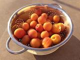 Apricots by Katrina Hauf