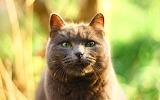 Cat collektion1w (93)