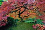 Japanese Garden Portland