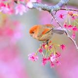 Spring Dream...