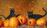 Cats-Halloween
