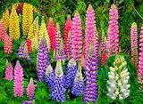 Flores900