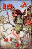 The Rose Hip Fairy