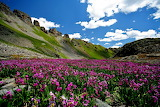 Flowers, mountains, nature