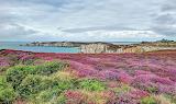 Brittany, heath, coast of the sea
