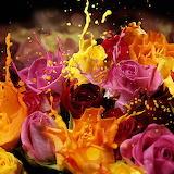 A Splash of Roses