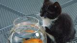 Fish for Dinner?